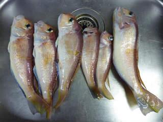 アマダイは釣って楽しく食べておいしい(2).jpg