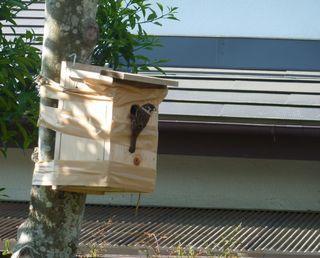 小鳥の巣箱001.JPG