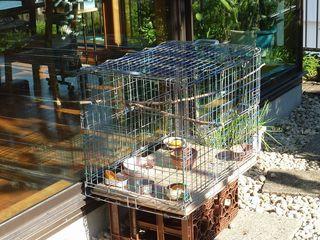 小鳥に楽しみもらうのは3月頃まで003.JPG