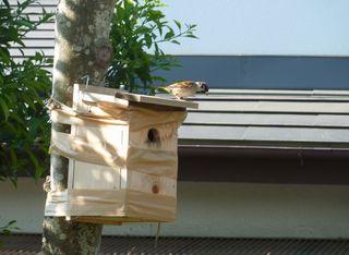 小鳥の巣箱002.JPG
