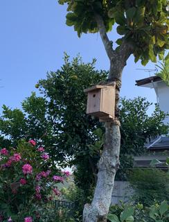 小鳥の巣箱を変えた002.JPG