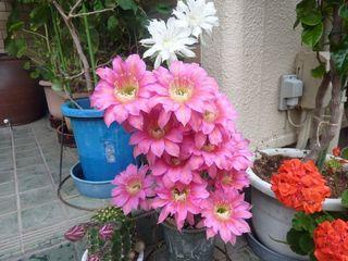 花は夜開く001.JPG