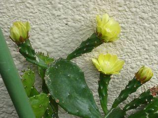花は夜開く003.JPG