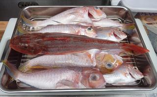 赤い魚ばかり 〜 6月21日釣行.JPG
