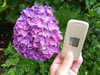 雨の時期 咲いた花々00102.JPG