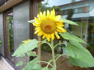 雨の時期 咲いた花々003.JPG